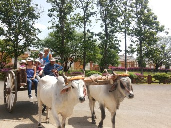 Agrotourism in Panama with EcoCircuitos