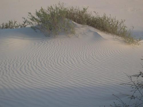 White Sands untouched