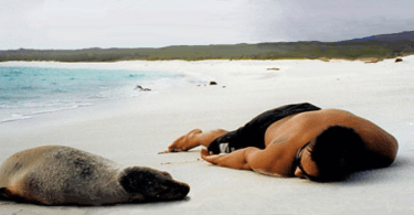 :Seal as man or vice versa.png