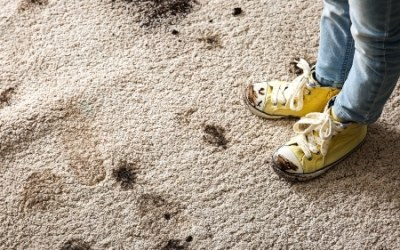 What Carpet Cleaning Method is Best?