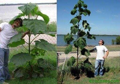 el arbol que puede salvar1 El árbol que puede salvar al mundo