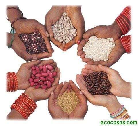 semillas02 Rescatar las semillas