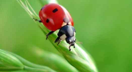 Riesgo de extinción en masa de los insectos 1