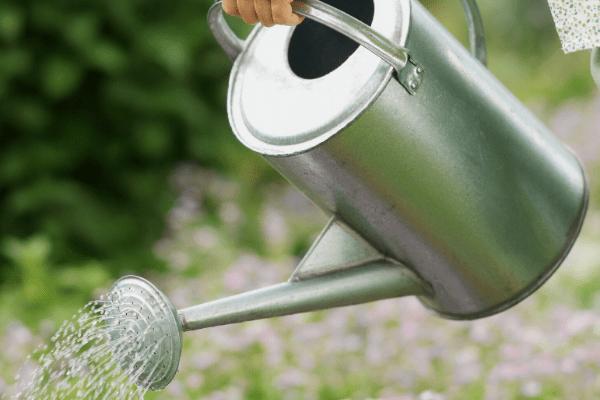 10 conseils pour jardiner responsable