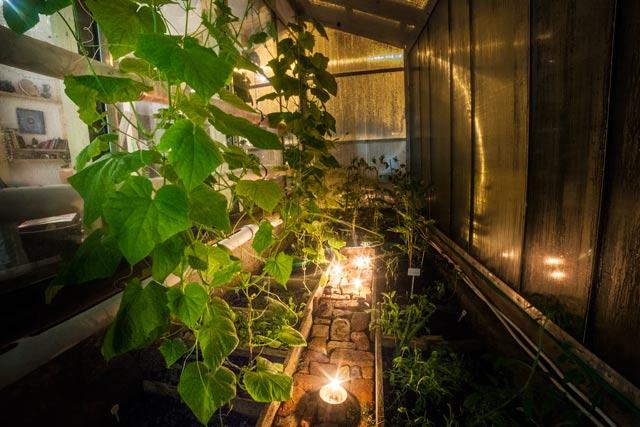 Свечи сжигают кислород и вырабатывают углекислый газ необходимые для растений, а вот разводить костры в вегетарии или теплице, наверное не стоит, — возможно появление конденсата серной кислоты, и повреждение листьев.