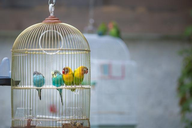 приму в дар птицу