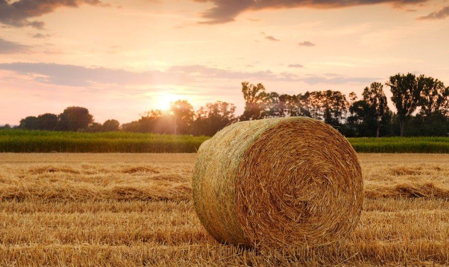 Credit Agricole: kredyt na fotowoltaikę dla rolników
