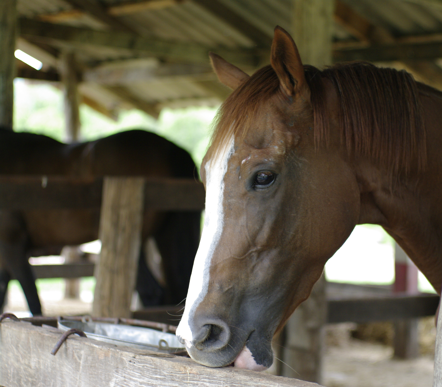 5 Things Wild Horses Can Teach Us About Horse Care