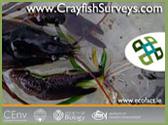 CrayfishSurvey