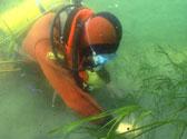 Marine Ecology (3)