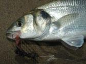 bass-angling