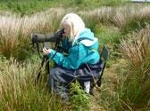 bird-survey-ireland