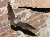 bat-surveys-for-buildings
