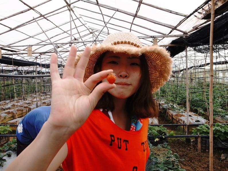 村おこしボランティア【ベトナム ダサ村コース】で収穫したイチゴを見せてくれる女子大生