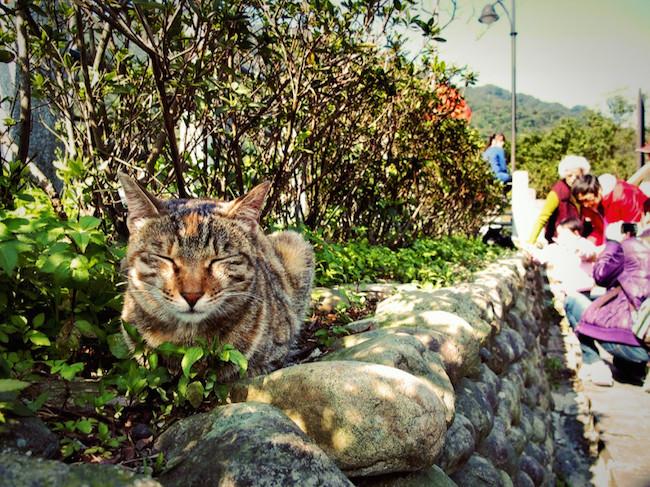 台湾の猫村「猴硐(ホウトン)」の猫