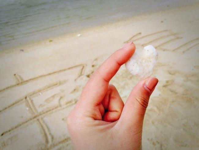 村おこしボランティア【宝島コース】での観光で発見したハート型のサンゴ