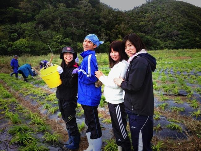 村おこしボランティア【沖縄やんばるコース】での農業ボランティアの様子
