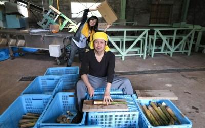 大名筍の箱詰めと竹林整備