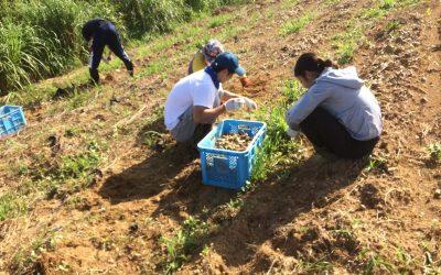 農業体験!