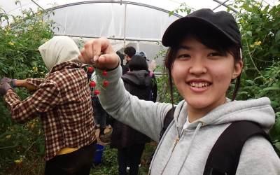 澎湖の農業