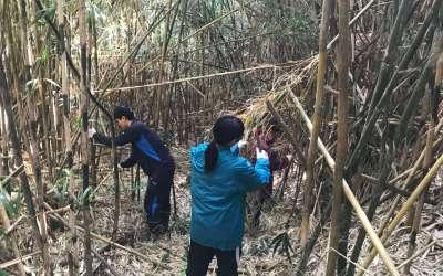 竹林整備の1日