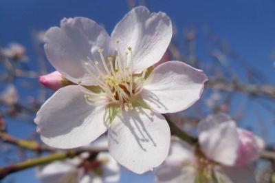 MI corazón alegras con tu flor diminuta y tu silencio