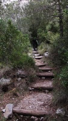Empezando a caminar por el sendero