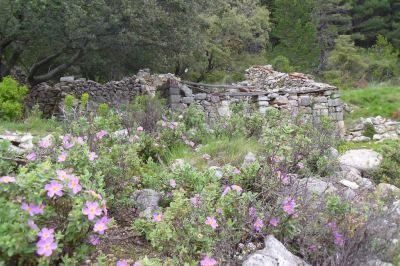 mas de Barró entre rosas de roca