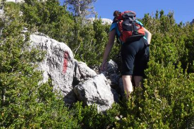 raya roja en roca