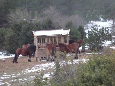 caballos en Casetes Velles