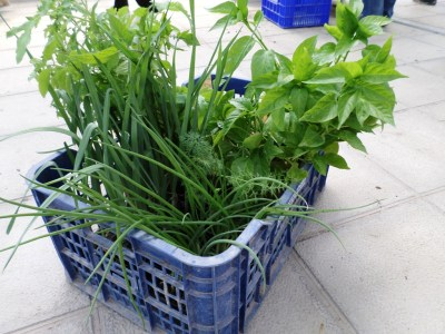nuestra selección de plantones ecológicos