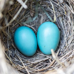 Protect your nest egg with Eco Flow Financials