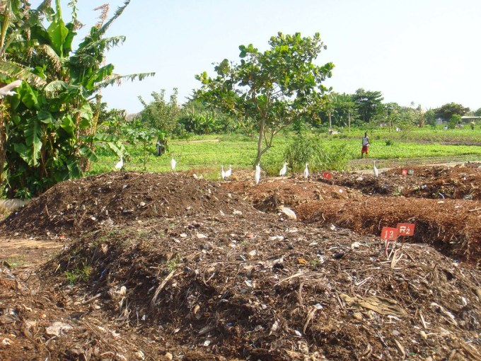 Plastic being composted