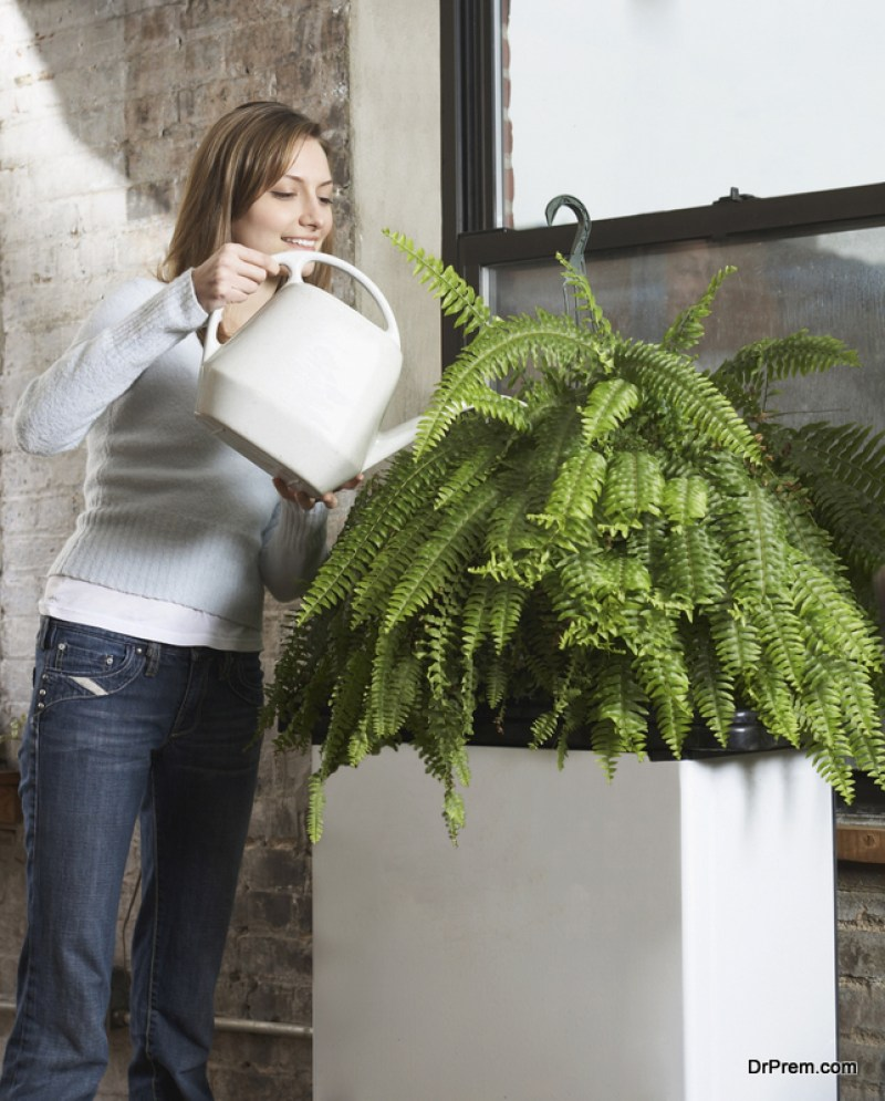 Decorate-with-Plants.