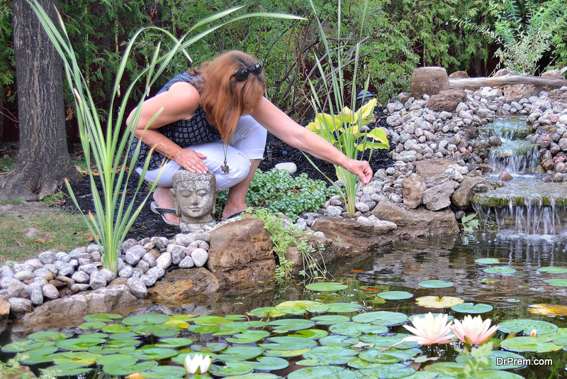 Properly Care for Ponds