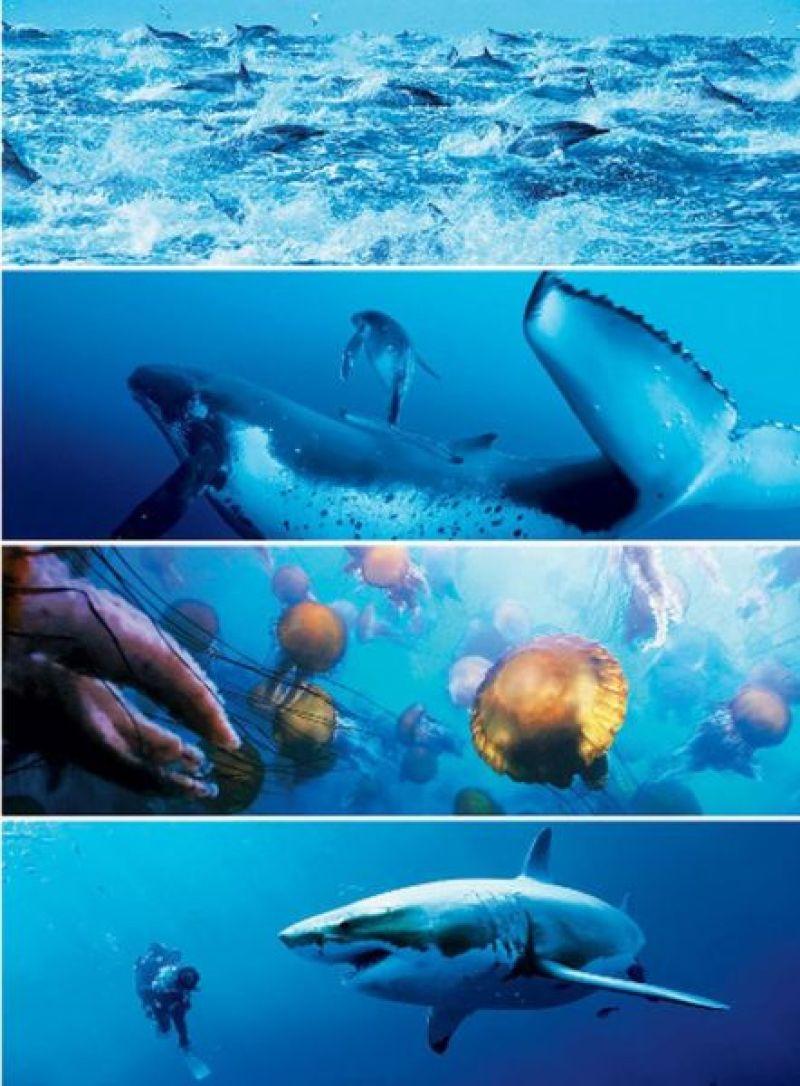 Disneynature's Oceans