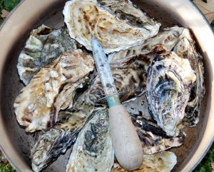 oysters are more eco-friendly than shrimp