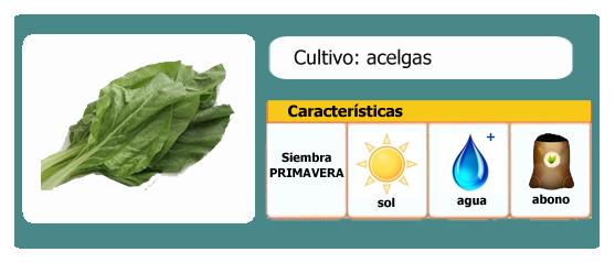 Ficha de cultivo ecológico: Acelgas l EcoHortum