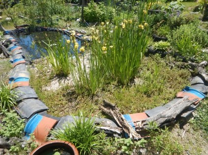 wetland area and pond to help treat the greywater