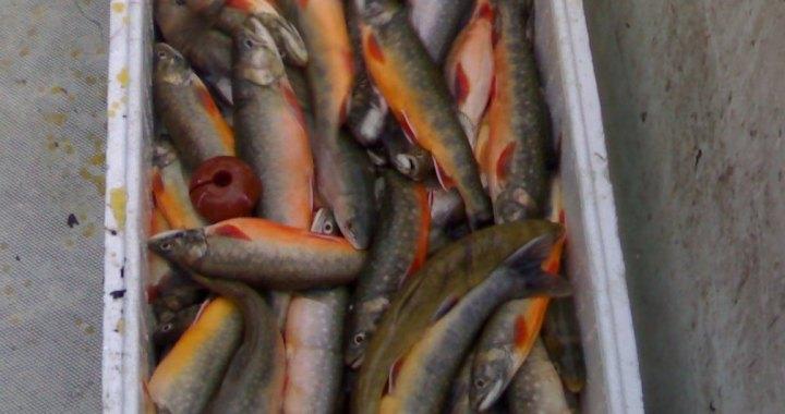 Pescato costante sul Lario
