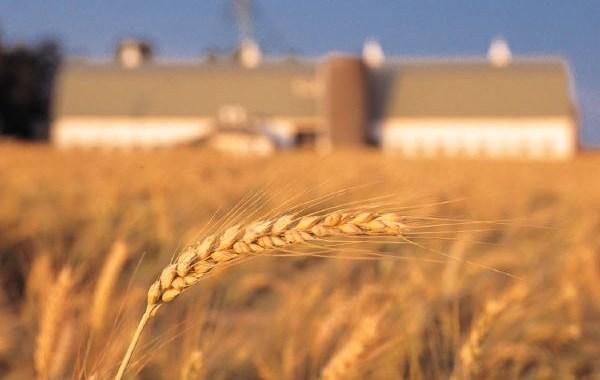 Rinnovato il contratto per 1500 operai agricoli comaschi