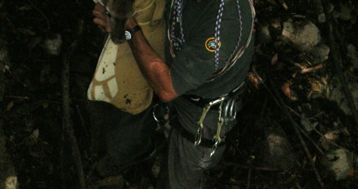 Moltrasio: polizia provinciale salva cerbiatto