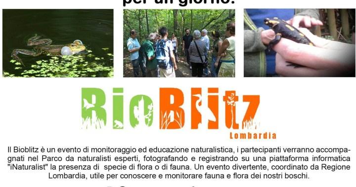 19 maggio/ San Fermo e Uggiate Trevano/ Bioblitz! alla Spina Verde e alle sorgenti del Lura