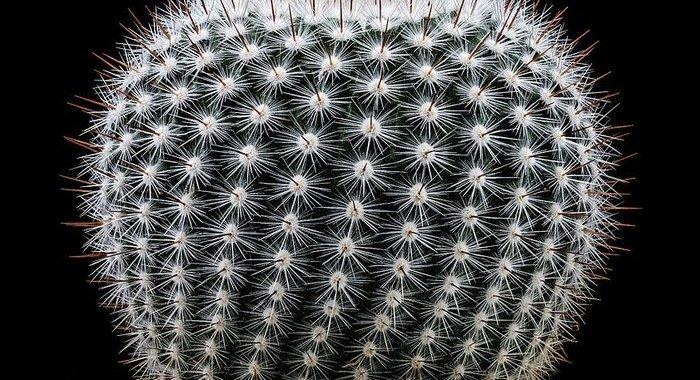 Aiuto!!!/ Venite a prendervi il vostro cactus/ Dalle 17,30 (precise) al Gloria domenica 16 dicembre