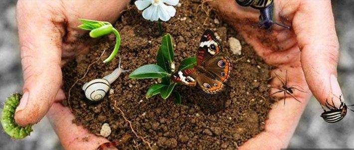 12 maggio/ Biodiversità in Erba