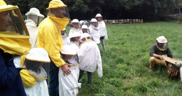 Erba/ Un successo la Festa delle api