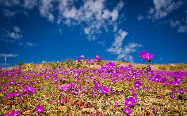 "24 aprile/ Arciwebtv/ Marco Lorenzini legge ""Le rose di Atacama"""