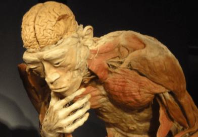 Bodies Exhibition: necro-follia artistica o arte scientifica?