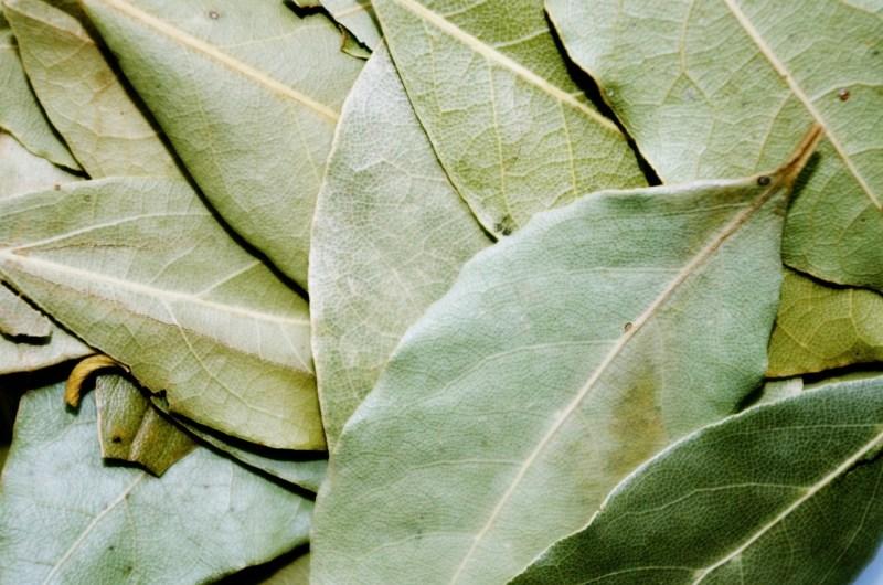 alloro foglie