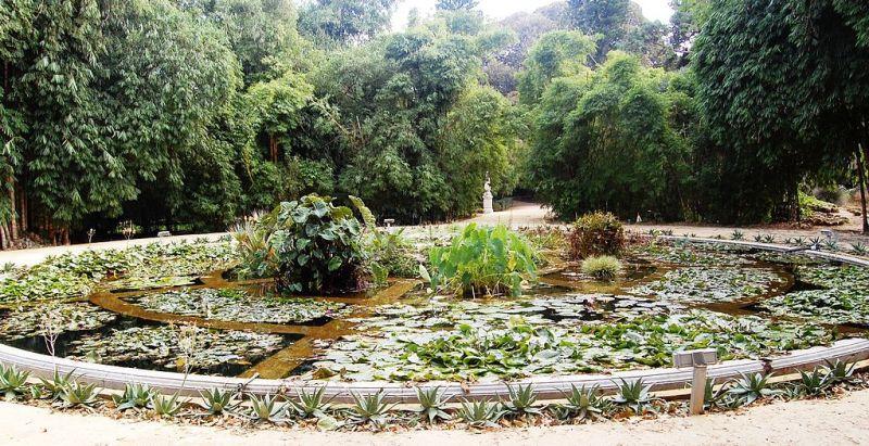 Orto Botanico acquarium
